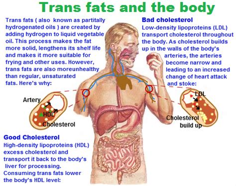 cholesterol normal picture 2