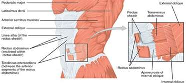 Lower abdonimal muscle twitches or fluttering picture 5
