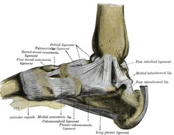 joint capsular sprain foot picture 5