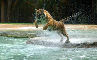 free copy of the swedish tiger guide picture 6