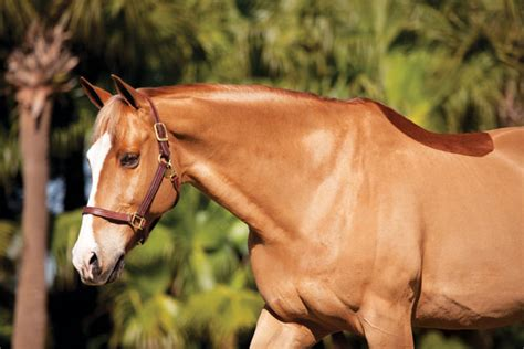 flaky skin on horses picture 11