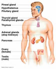endocrinology of aging female body picture 10