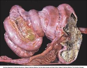infection in the intestines or colon picture 3