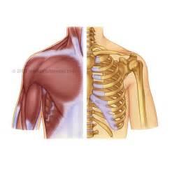 shoulder picture 6
