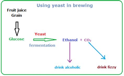 yeast in brewing picture 7
