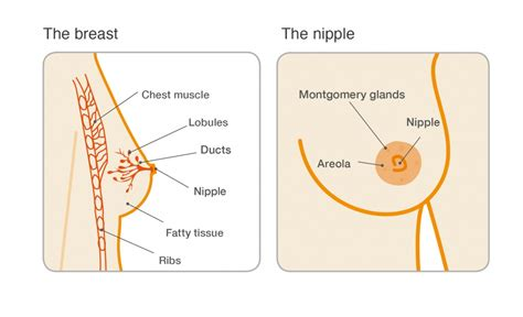 areola changes in skin both breast picture 11