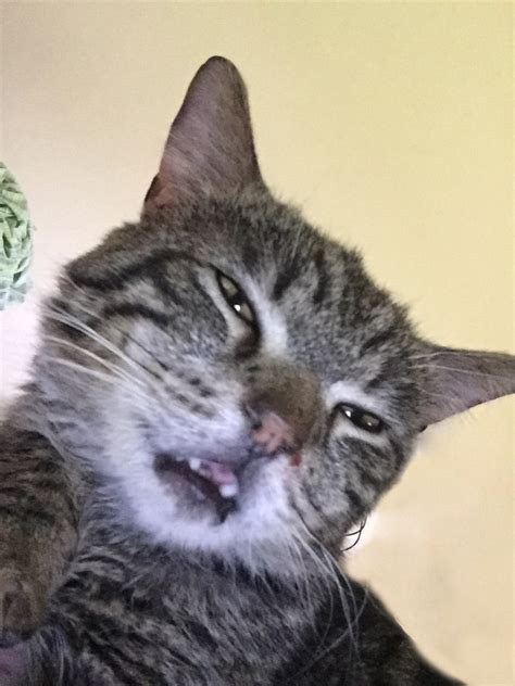 cat that grinds his teeth when he eats picture 9