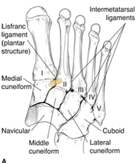 canine joint pain picture 2