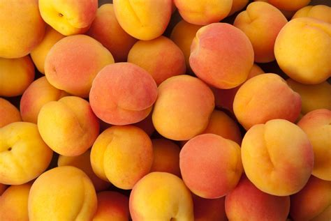 apricots health picture 11