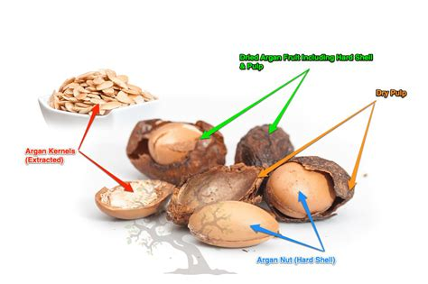 argan tree nut picture 5