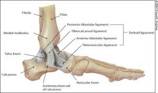 ankle joint effusion and ruptured archilles tendon picture 12