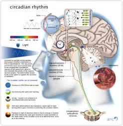 circadian rhythm sleep disorders picture 5