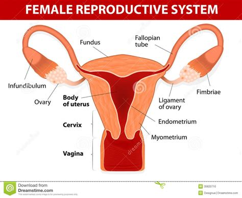 reproductive picture 3