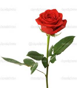price of the soumi's rose plus water picture 9