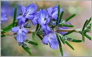alfalfa pills picture 13