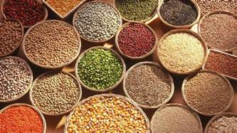 hulled safflower seed picture 13