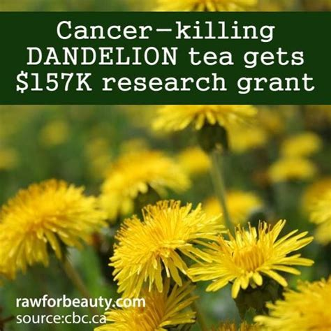 dandelion tea and herpes picture 3