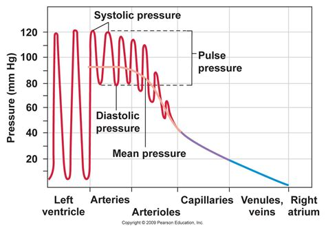 Lower systemic blood pressure picture 2