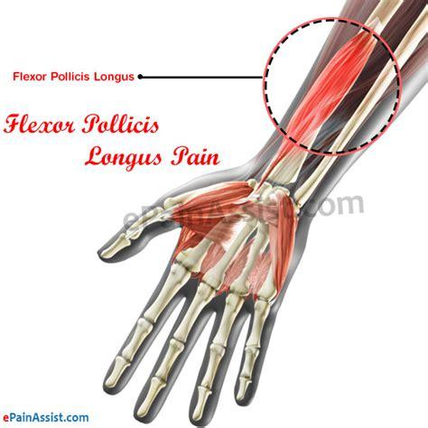 flexor pollicis longus muscle picture 1