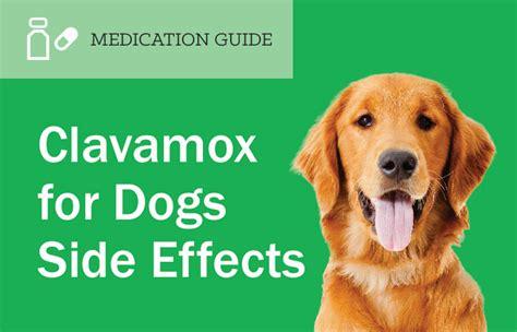 clavamox side effects picture 2