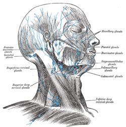 occipital lymph nodes picture 3