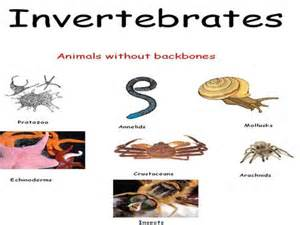 invertebrates sponges digestion picture 10
