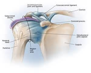 shoulder joint picture 3