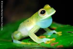 amphibian diet picture 15