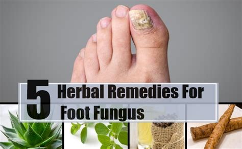 herbal supplement for fungus picture 3