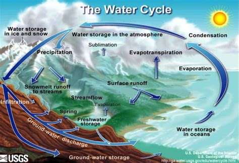 bacterial role in nitrogen cycle picture 6