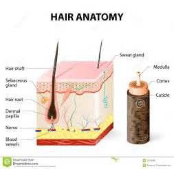 deposits on the hair shaft picture 2