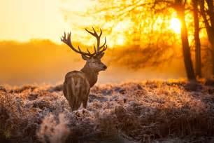 will deer anyler spray make my bigger picture 5