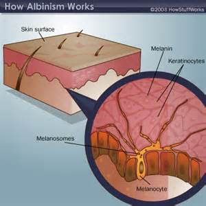 how cultured skin is made picture 11