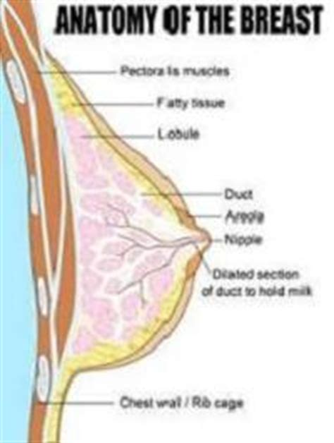 yeast infections in breasts picture 17