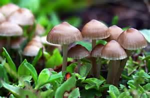 mushrooms picture 7