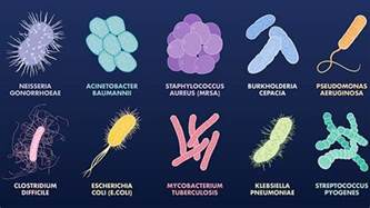 antibiotics bacterial infections picture 10