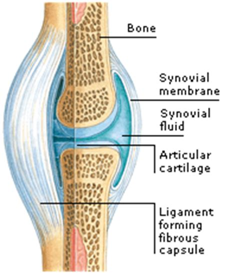 function of joints picture 10