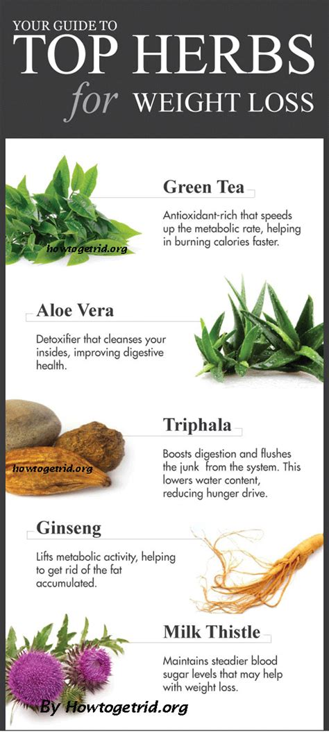 best herbs for weight loss picture 1