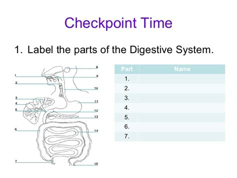 digestive system 8 parts picture 1