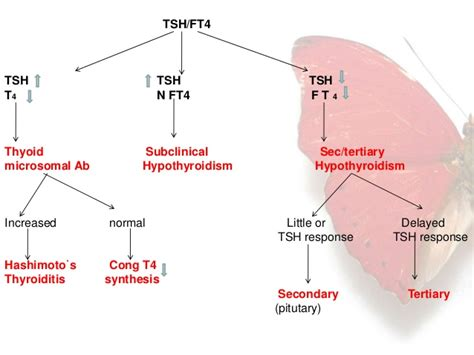 hair loss and thyroid picture 5