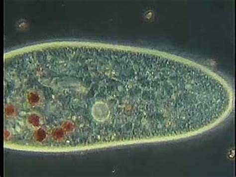 reproductive picture 13