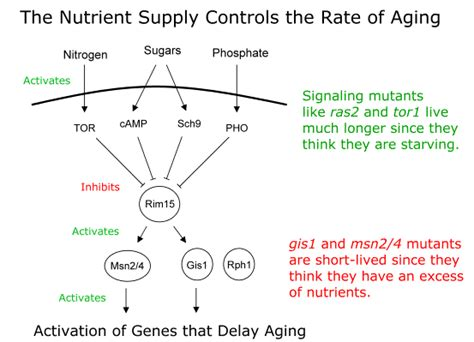 an aging protein picture 7