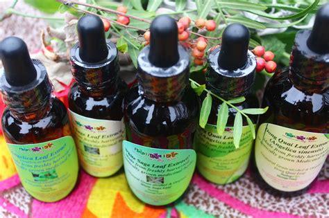 hw do one locally use herbs like moringa picture 5