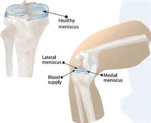 meniscus muscle picture 2