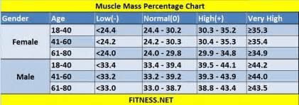 average muscle weight picture 7