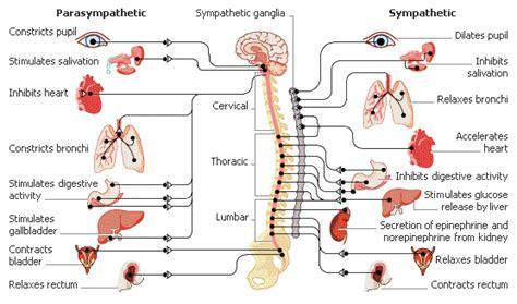 involuntary bowel movements picture 6