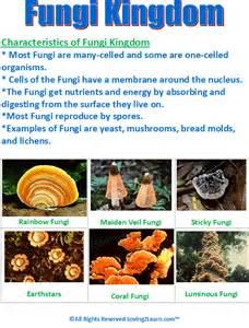fungi kingdom lesson plan picture 1