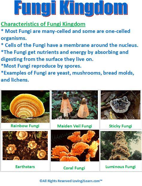fungi kingdom picture 11