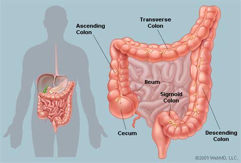 colon digestive picture 17