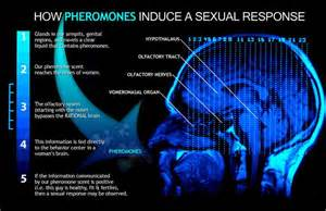 pheromones effect on humans picture 1